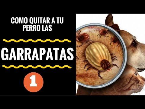 Diversos tratamientos para eliminar las garrapatas en - Pulgas en casa ...