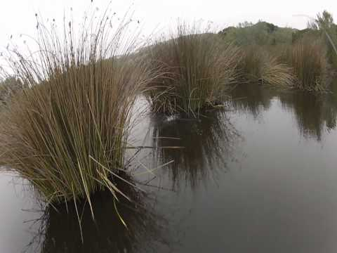 Largemouth Bass Fishing: Frog Fishing 19 May 2012