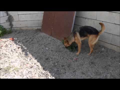Animalinneed: Video of Jochie