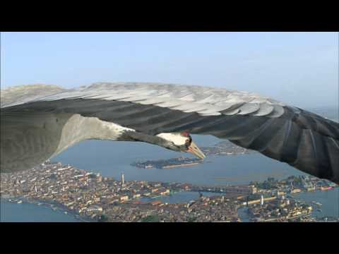 BBC Earthflight (Winged Planet) - Common Cranes Fly Over Venice (Narrated by David Tennant)