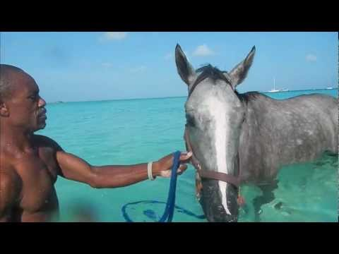 World Heritage Tourism | Barbados Holidays Polo, Horse-Racing