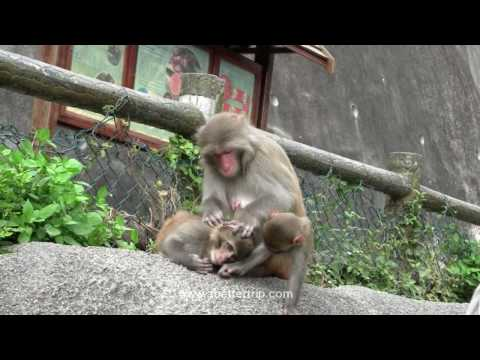 Monkey Hill, Kowloon, Hong Kong (with monkey sex)
