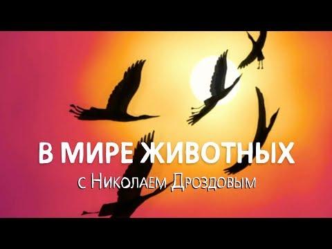 В мире животных с Николаем Дроздовым  Выпуск 11 (2018)