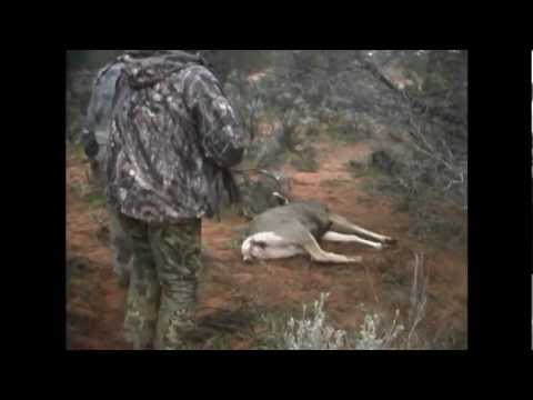 Muzzleloader Mule Deer Hunt On The Paunsaugunt - MossBack