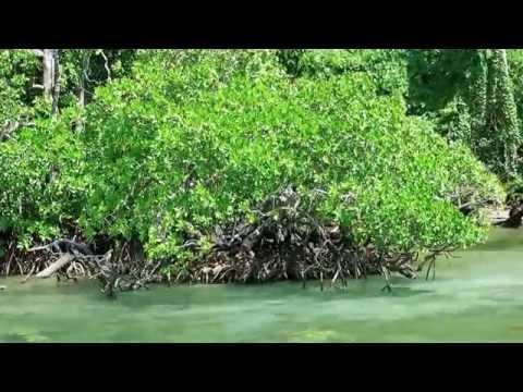 ITK IPB Tanjung Manare Raja Ampat : When Mangrove meet Coral Reef