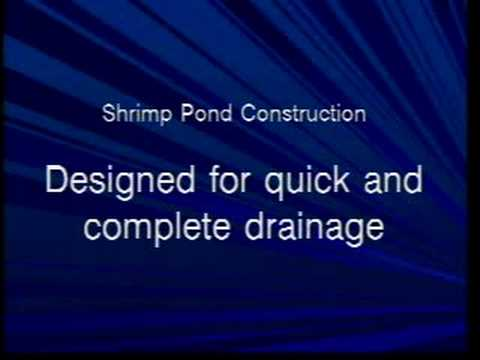 Inland Shrimp Farming In Alabama Part 1 Of 9