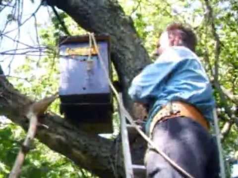 глазов г.в пчелиная охота. ловля вольных роев