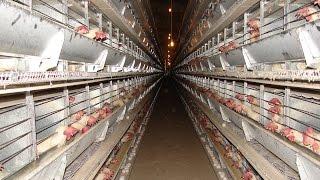 Türkiye'nin yumurta fiyatını Afyon Başmakçı belirliyor