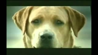 Quảng cáo cực hài - Nỗi đau của chó ( funny commercial - Dog with broken heart)