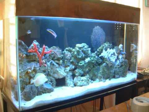 Acuario atlantida proyectos para oficinas y consultorios for Todo para acuarios