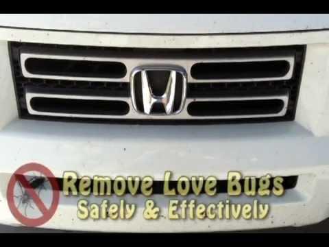 Lovebugs - A.u.t.o.m.a.t.i.c. life
