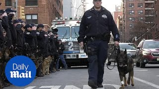 Police dog Cesar put down after a lifetime of service