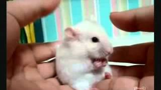 Wow !!! Cute Surprised Mouse