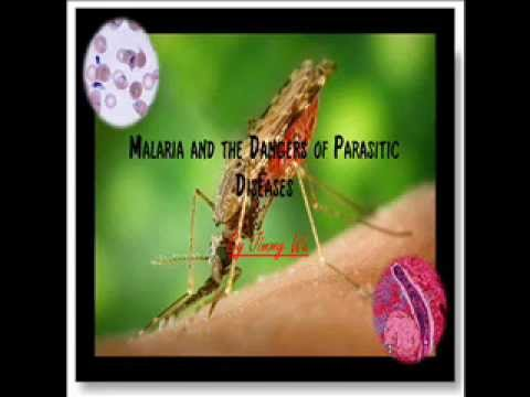 Malaria and the Dangers of Parasitic Diseases Presentation Part 1/2