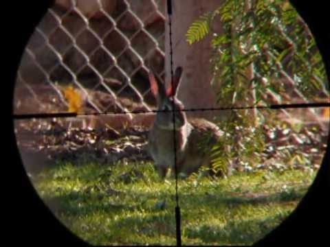 Hunting California Ground Squirrels shooting with .22 Benjamin Marauder PCP air gun part 3