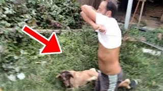 Man Rips Off His T Shirt To Save A Dog Just In Time, Rescue of a Scared Homeless Dog