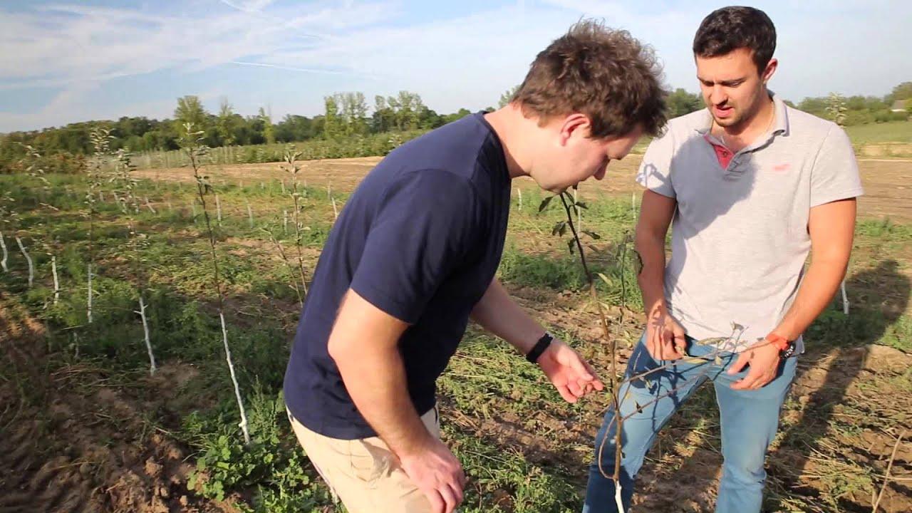 mszyce, forum sadownicze, uprawa jabłek