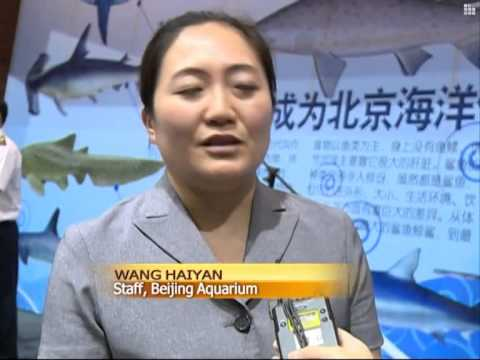 Beijing aquarium welcomes six sand tiger sharks