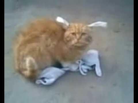 Кошак-заяц