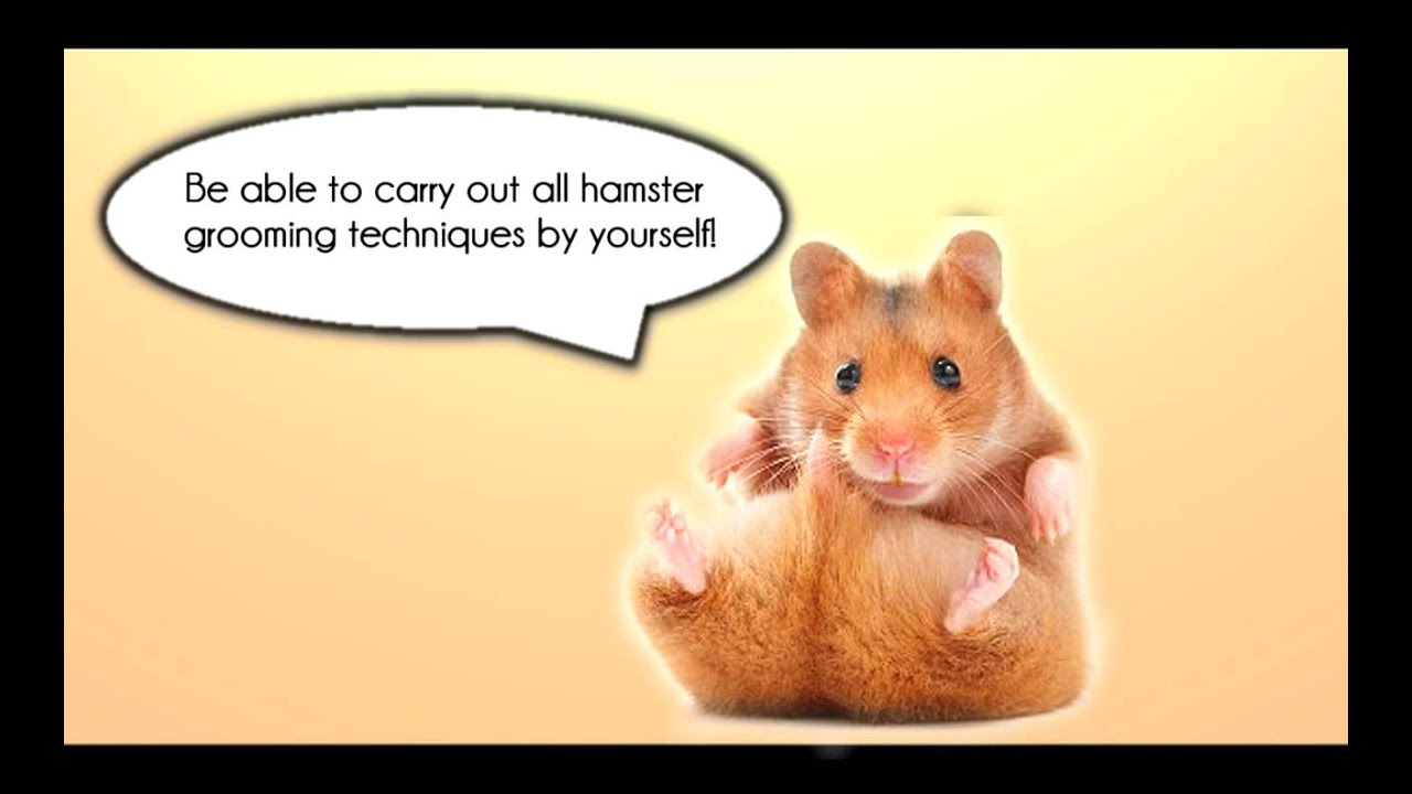 serious about hamsters   ultimate guide for hamster care