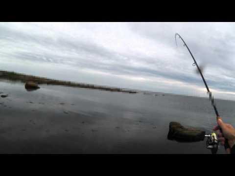 Fiske efter multe 2011-07-14
