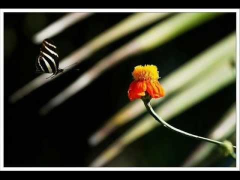 Pal Pal Dil Ke Paas Tum Rahti Ho ... (Voice -- Prakash Govind...