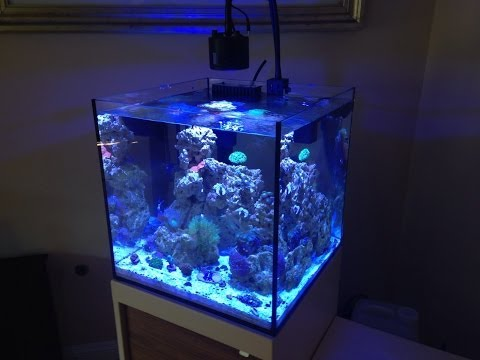 Beautiful Reef Tank - 34 Gal Solana