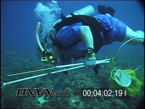 8/4/2001 Dry Tortugas, FL - Lobster Hunting Scuba Divers