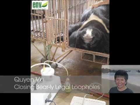 Closing Bear-ly Legal Loopholes in Vietnam: Behind the Schemes, Episode 20