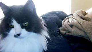 Kitty watching a David Attenborough bird documentary on my laptop