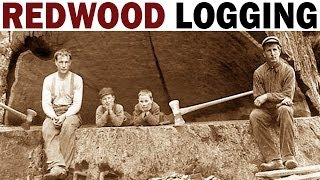 Redwood Logging | 1946 | Documentary on the Giant Redwood Lumber Industry in California