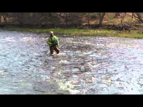 A beginners guide to wet fly fishing holsinger 39 s fly shop for Is a fish wet