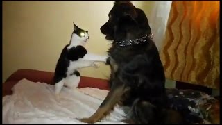 Funny Fight - Which One is Better Cat or Dog