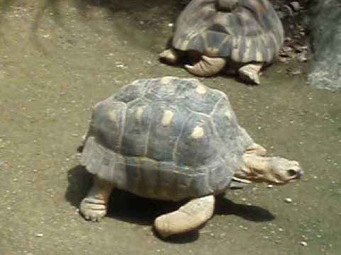 天王寺動物園・カメ
