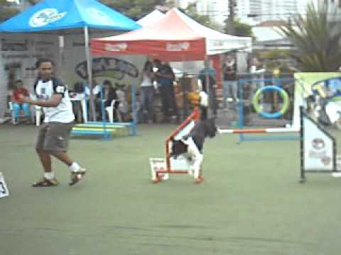 Meesch rare agility video!!! (2004)