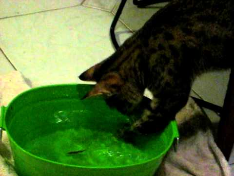 SAVANNAH CAT FISHING