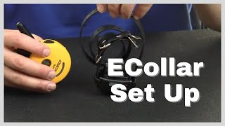How to Set Up the Ecollar