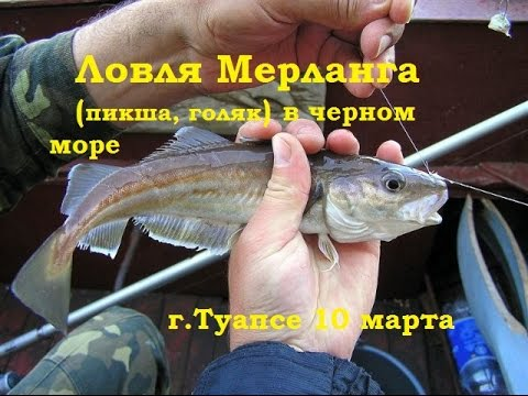 черное море.пикша.русская рыбалка