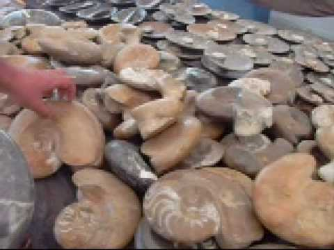 Ammonites the Video Video