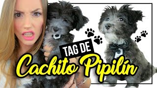 CACHITO VA A SER PAPA!? LA PEOR TRAVESURA DE CACHITO!! ♥ Katie Angel