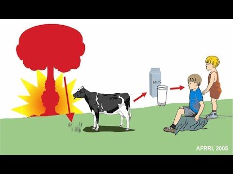 Dairy Farmer near Fukushima faces Hard Problems