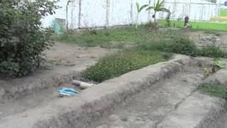 PLANTAS ORNAMENTALES PUEDEN SER LLEVADAS A AREAS VERDES DE CASA GRANDE