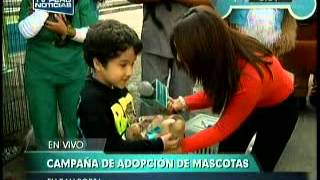 San Borja Promueve Campaa De Adopcin De Mascotas (video)