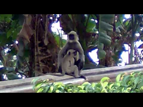 A Little Monkey With Her Mom In Garden video