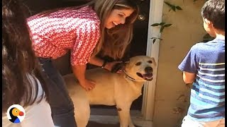 Missing Dog Reunites With Family A YEAR Later | The Dodo