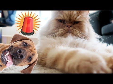 Let´s build - BARKING DOG ALARM!