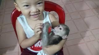 Baby Monkey | Doo Drinks Milk So Cute