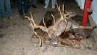 Huge Kentucky Buck - Verified