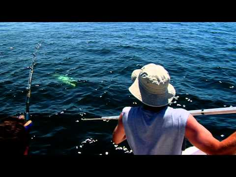 Giant Bluefin Tuna - July 2, 2011