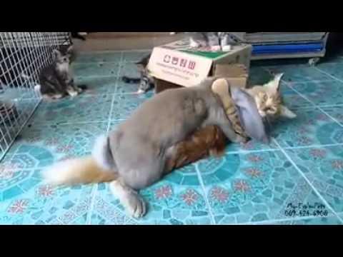Hase popt mit einer Katze